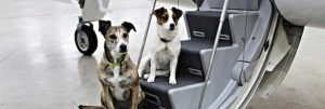 Pets on Jets - dogs on charter aircraft steps