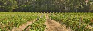 Wineries of Western Australia